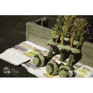 gambar gunung bromo - bunga edelweis