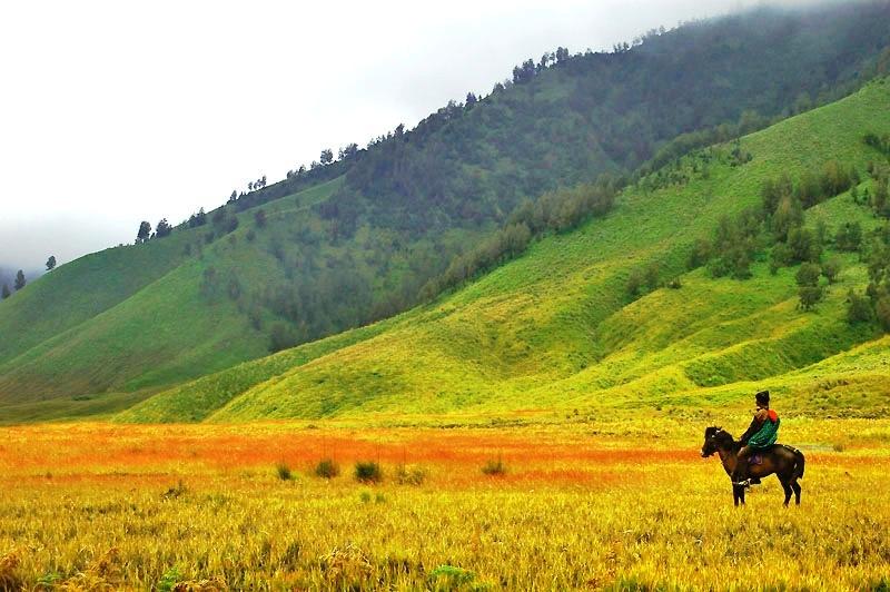 padang rumput bromo saat musim kemarau sumber : www.tourbromomurah.info