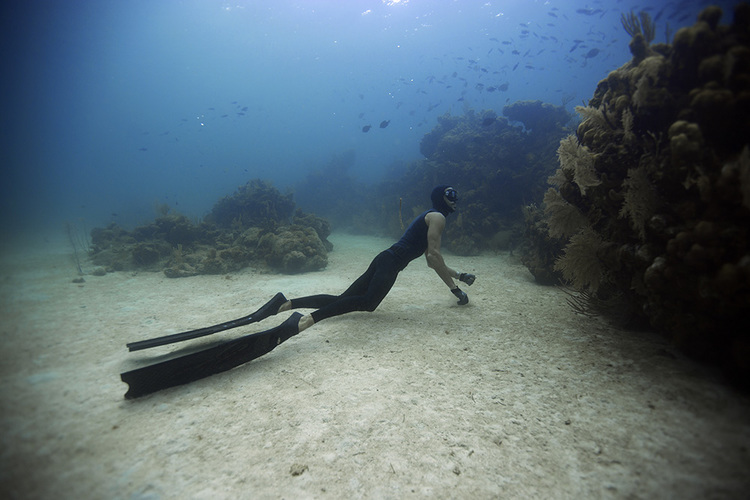 sumber : www.freedivingmaldives.com